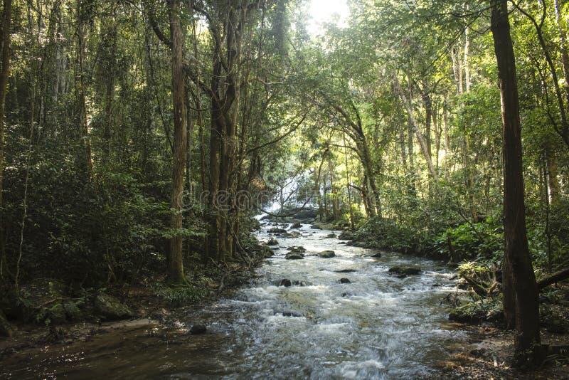 Пропуская река в середине изумлять, сочном зеленом лесе в экзотическом Mae Klang Luang Chiang Mai, Таиланд стоковое фото