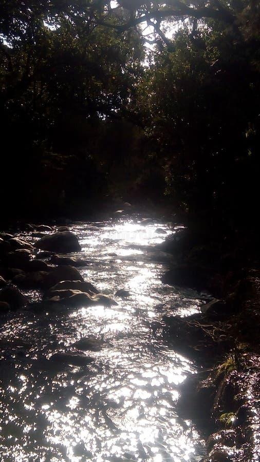 пропуская река под кустовидной и заросшей лесом зоной стоковое фото