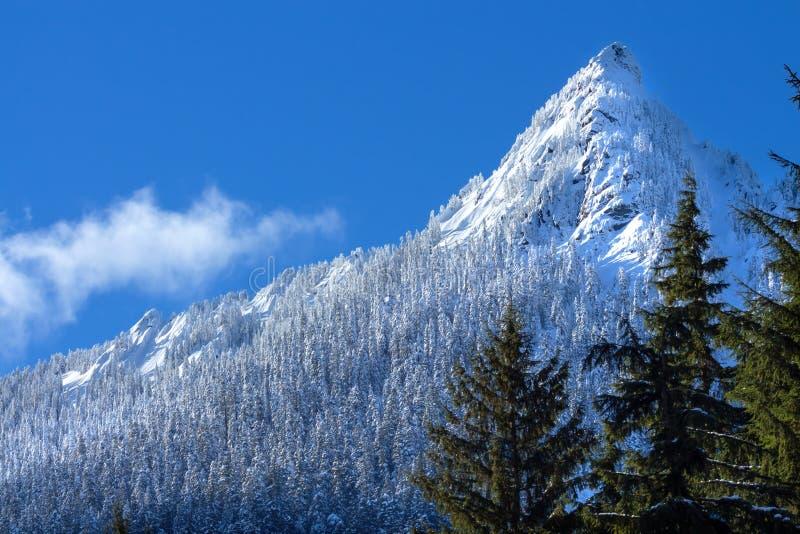 Пик горы снежка деревьев Snowy Butte McClellan, пропуск w Snoqualme стоковые фотографии rf