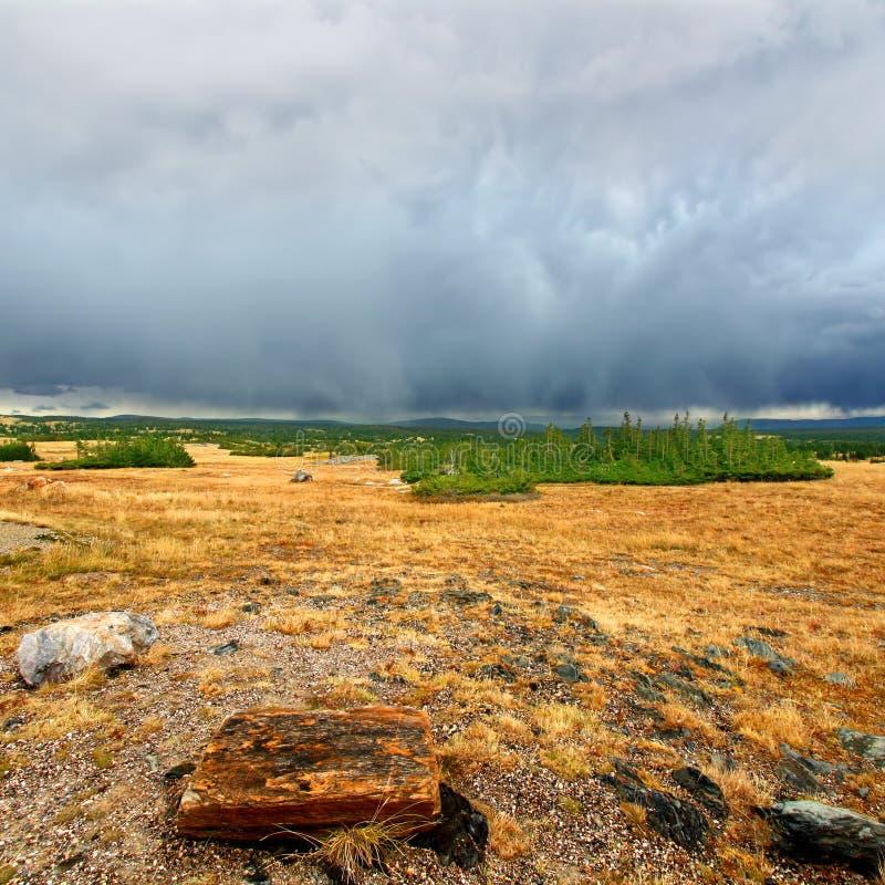 Пропуск национального леса смычка медицины снежный стоковые фото