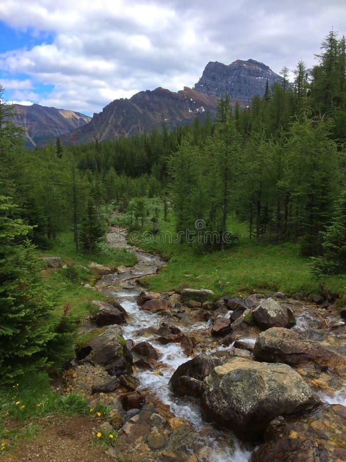 Пропуск часового в национальный парк Banff - заводь стоковое изображение rf