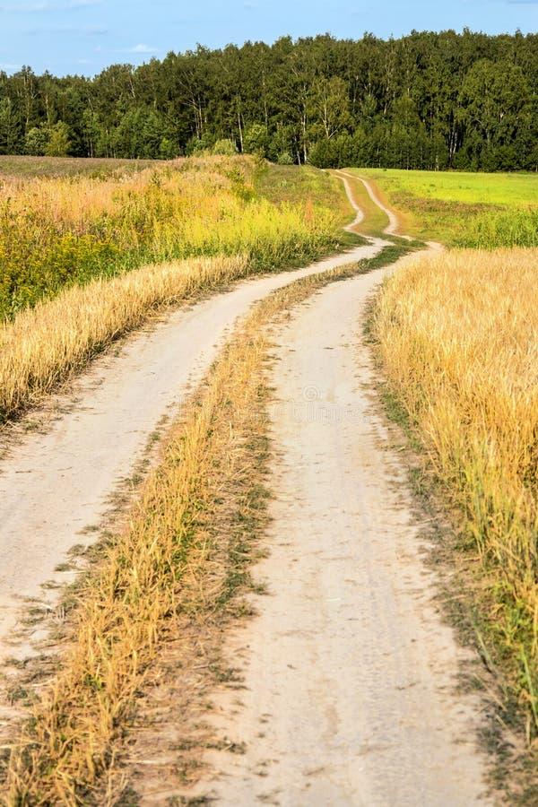 Проселочная дорога замотки через поля пшеницы и клевера стоковые изображения