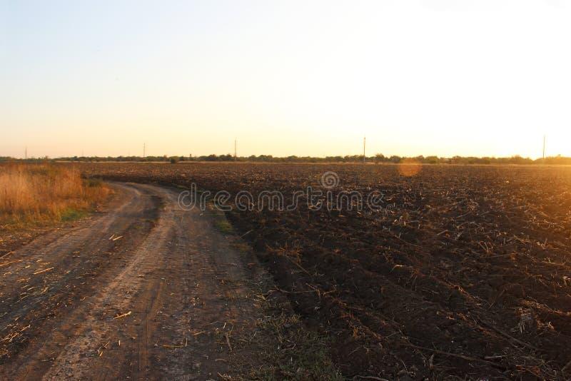 Проселочная дорога и скошенное поле солнцецветов на заходе солнца в осени стоковое фото rf