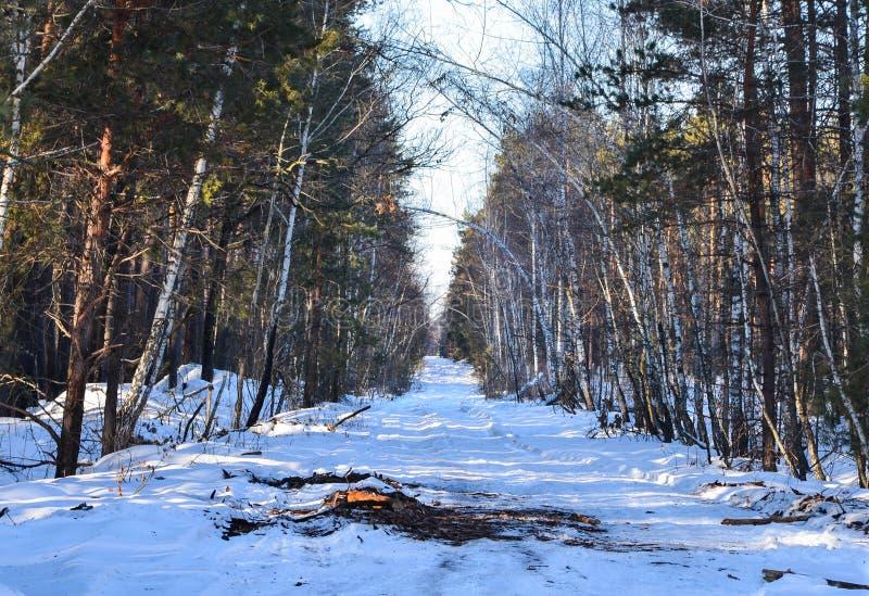 Проселочная дорога малой страны зимы через снежные поля и леса с солнечностью на деревьях стоковое фото