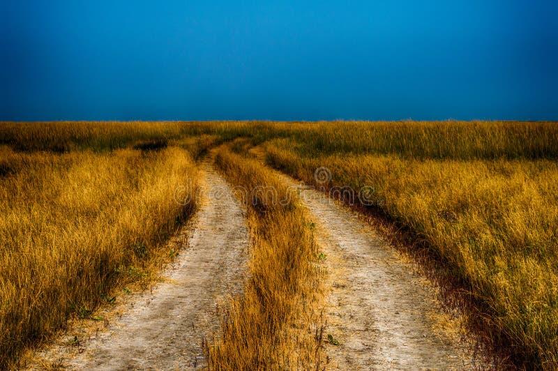 Проселочная дорога через пшеничное поле Остров Jarylgach стоковое фото