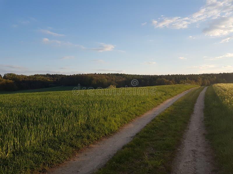 проселочная дорога через пшеничное поле стоковые изображения rf