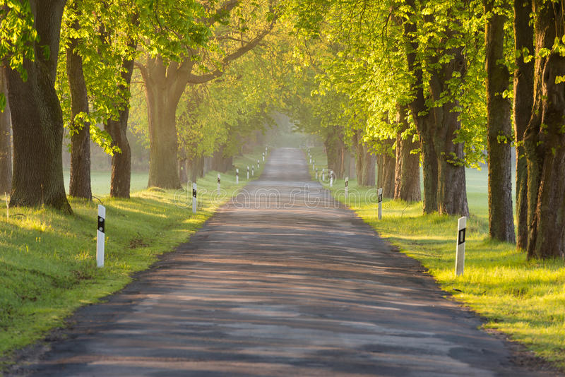 Проселочная дорога весной стоковая фотография