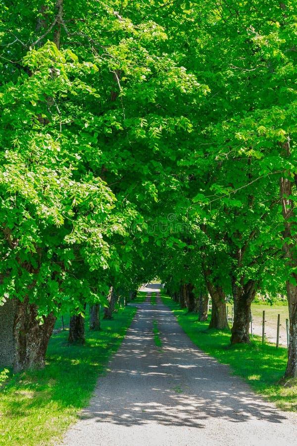 Проселочная дорога, зеленые деревья стоковое изображение