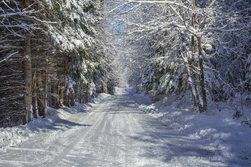 Проселочная дорога зимы стоковая фотография rf