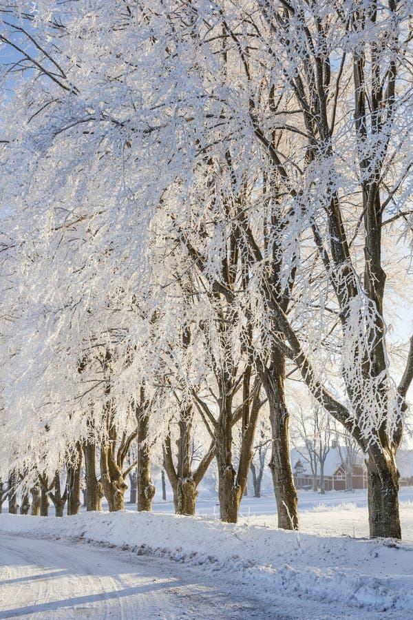 Проселочная дорога зимы стоковые изображения rf