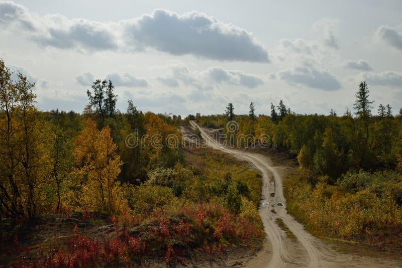 Проселочная дорога через лес стоковая фотография rf