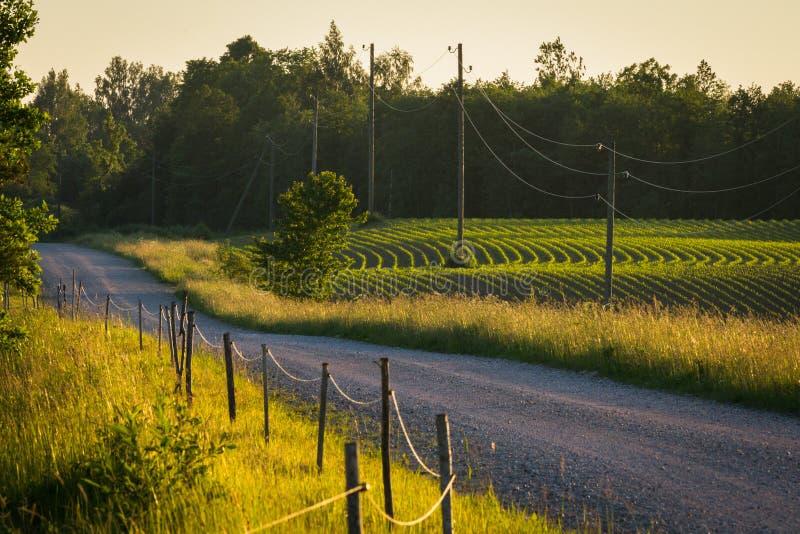 Проселочные дороги стоковое фото rf