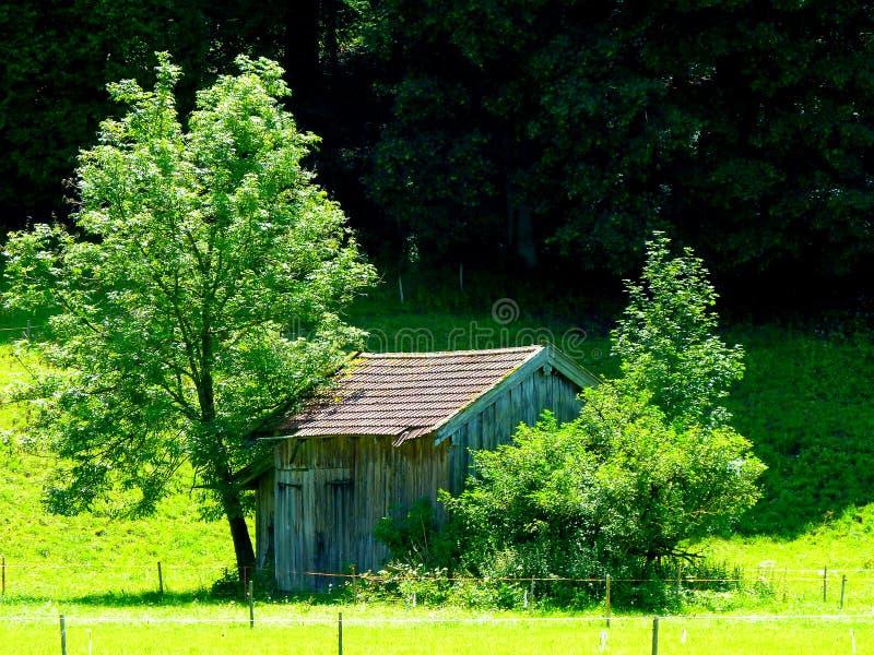 Простая деревянная хижина с крыть черепицей черепицей крышей между 2 деревьями стоковое изображение