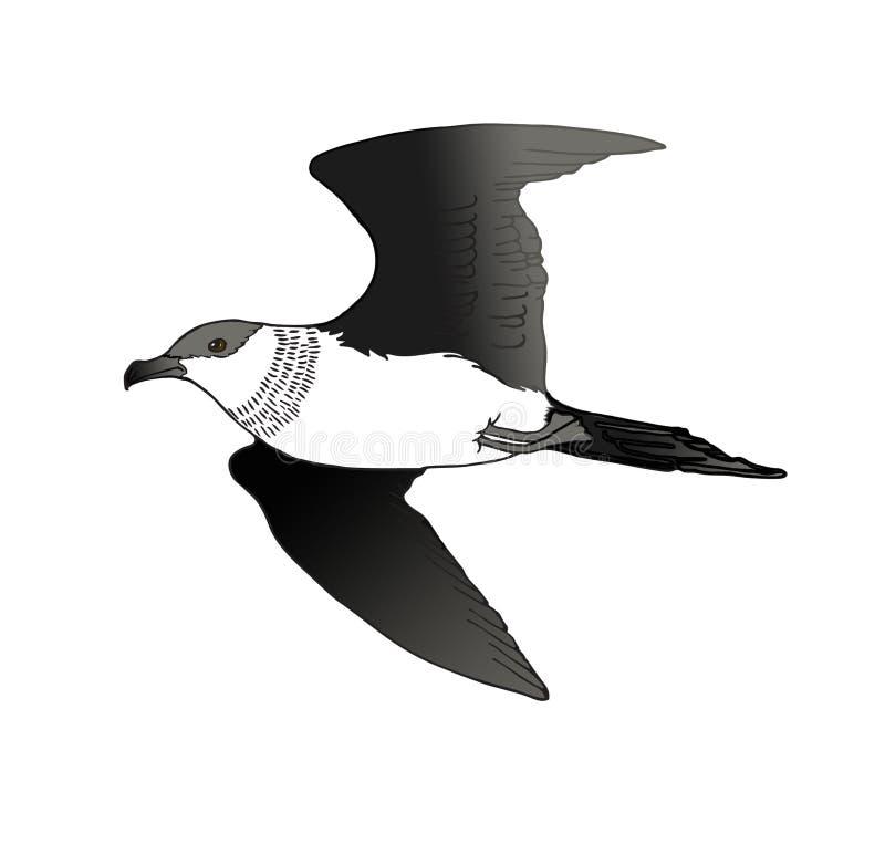 Простая иллюстрация птицы ледовитого поморникового стоковое фото rf