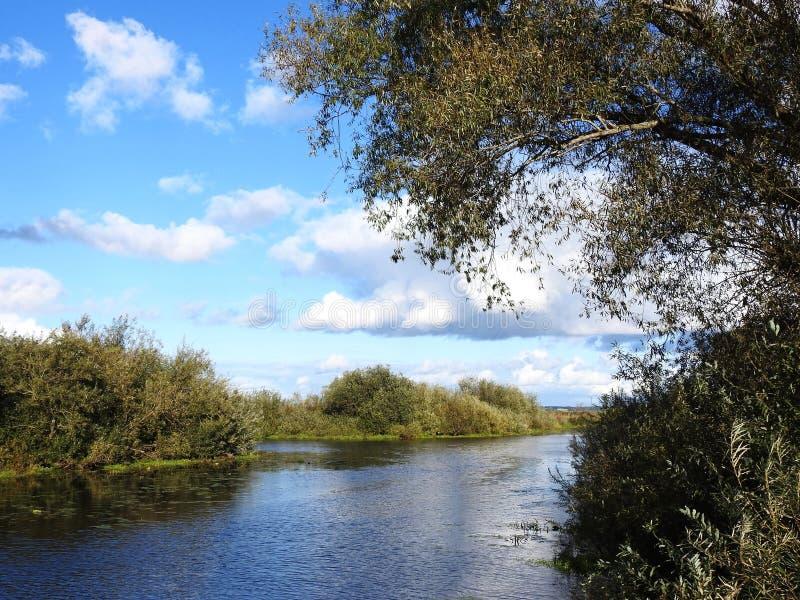 Простая река и красивые деревья, Литва стоковая фотография