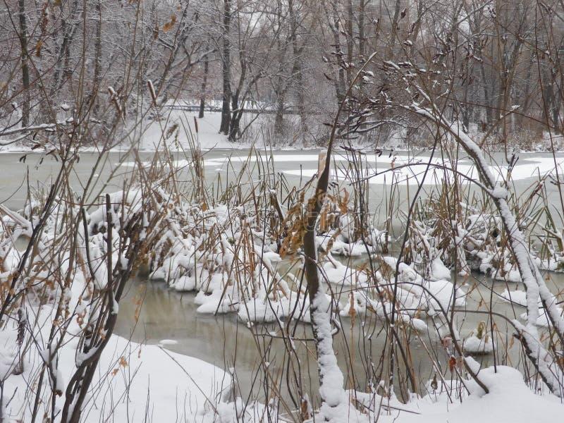 Простое Снег-покрытое зимой стоковое изображение