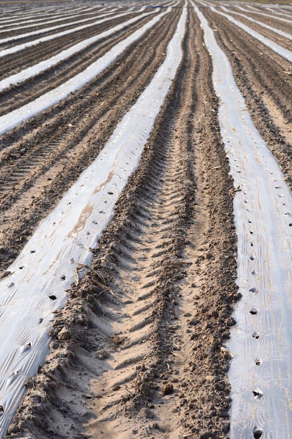 Простое фоновое изображение фото влажной весны смололо с семенами стоковое фото rf