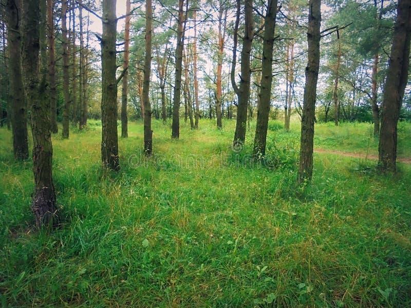 Просторный лес стоковое изображение