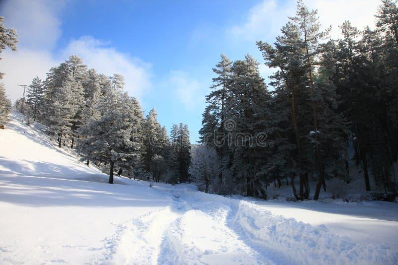 Простые снежные следы покрышки - портрет стоковое фото