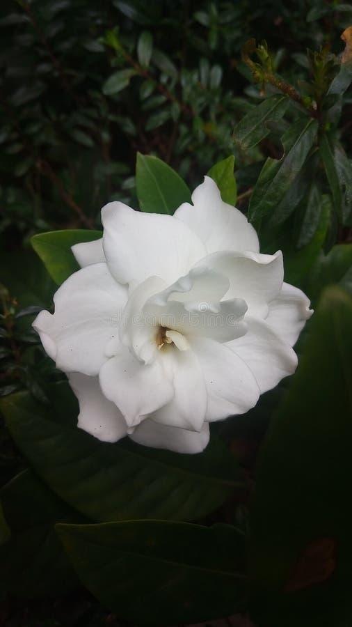 Простые цветки стоковая фотография rf