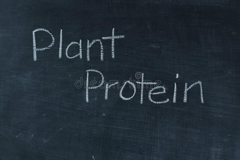 Протеин завода стоковое изображение