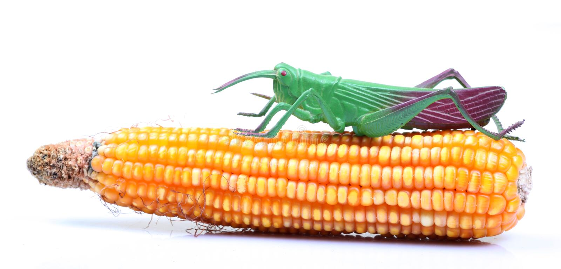 противник урожая стоковое изображение rf