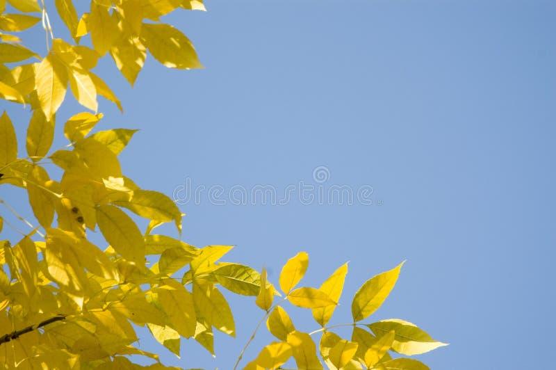 против голубого желтого цвета неба листьев стоковые изображения rf