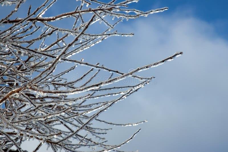против голубых замороженных ветвей небо Стоковое Фото