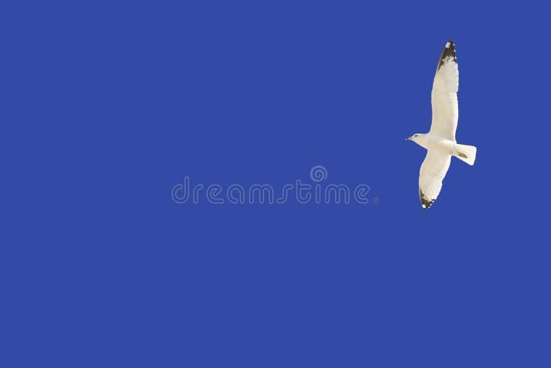 Download против голубого неба чайки стоковое фото. изображение насчитывающей экземпляр - 41655698