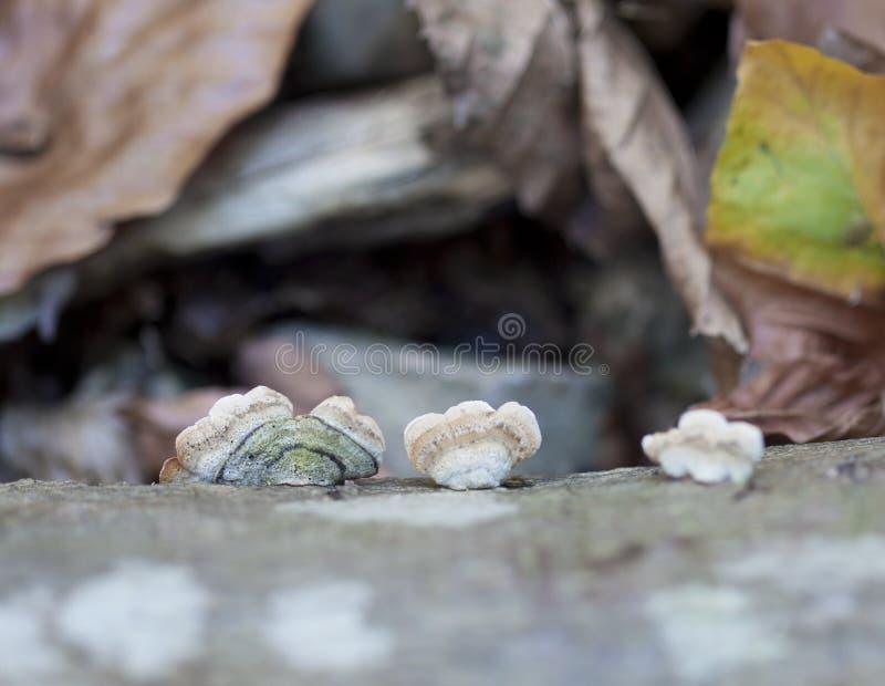 против древесины гриба макроса листьев стоковые фотографии rf