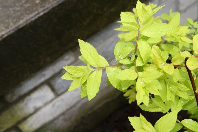 против камня шагов зеленого света листва росы стоковые изображения