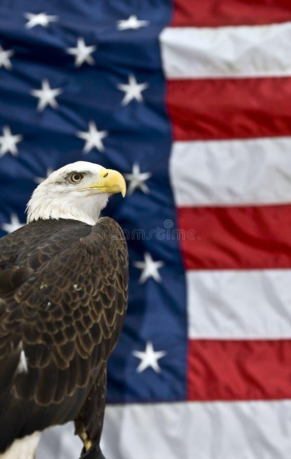 против флага США облыселого орла стоковое изображение