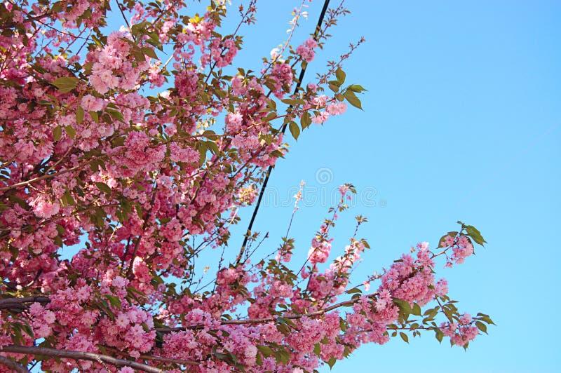 против blossoming вала голубого неба стоковые изображения