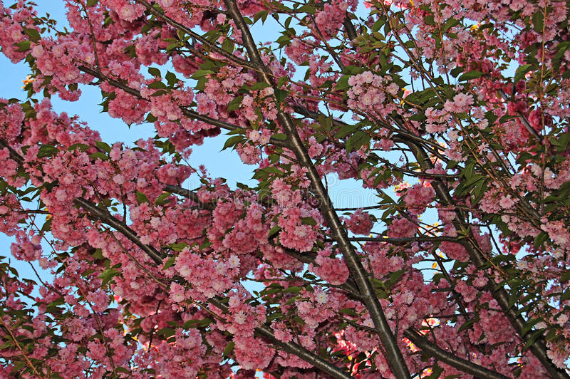против blossoming вала голубого неба стоковая фотография rf