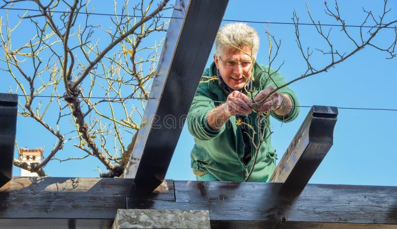 Профессиональный садовник подготавливает заводы весной в сквере стоковая фотография