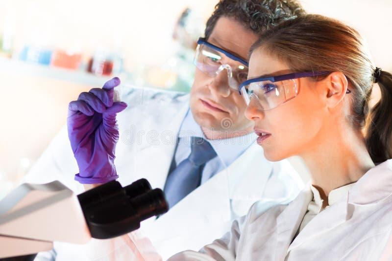 Профессионалы здравоохранения работая в лаборатории. стоковое изображение