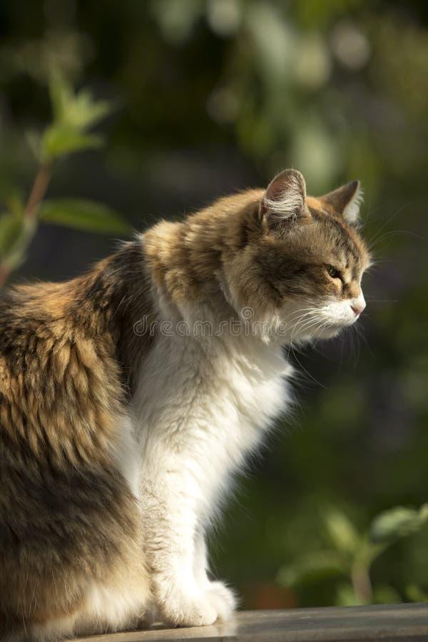 Профиль кота ситца наслаждаясь солнцем утра стоковые изображения rf