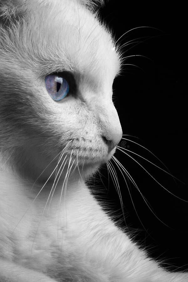 профиль кота стоковая фотография rf
