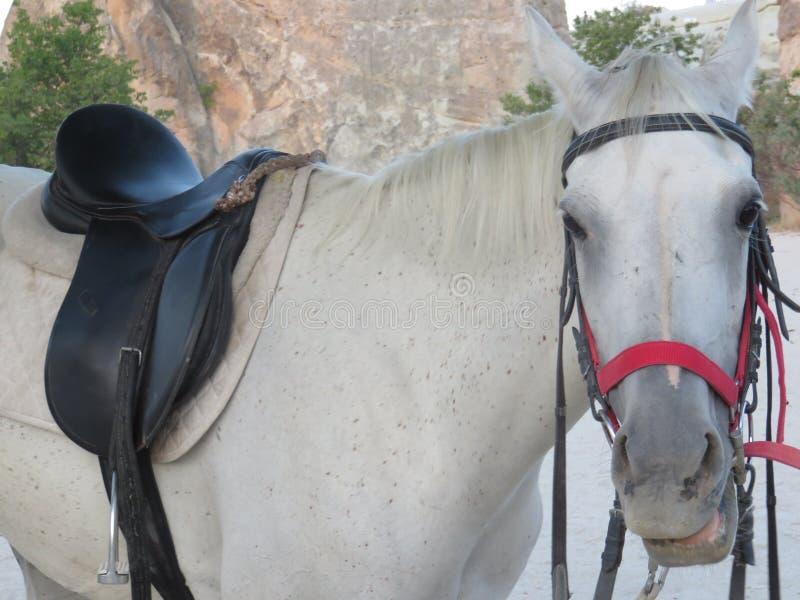 Профиль красивой белой лошади стоковая фотография