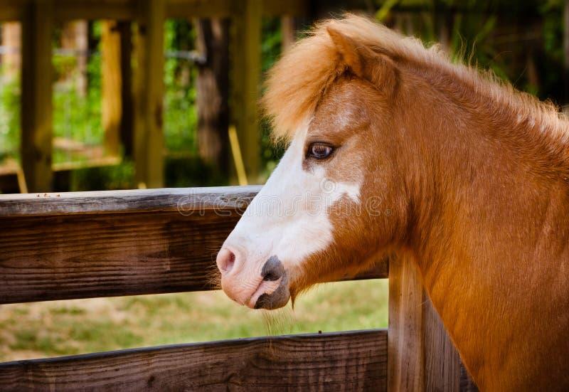 профиль портрета пониа фермы стоковые изображения rf