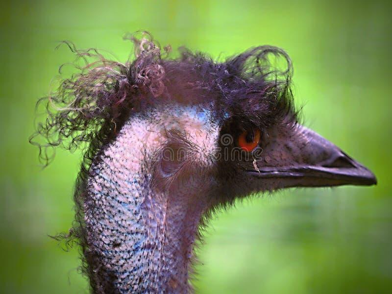 Профиль птицы главный с пестроткаными и отличительными цветами стоковые изображения rf