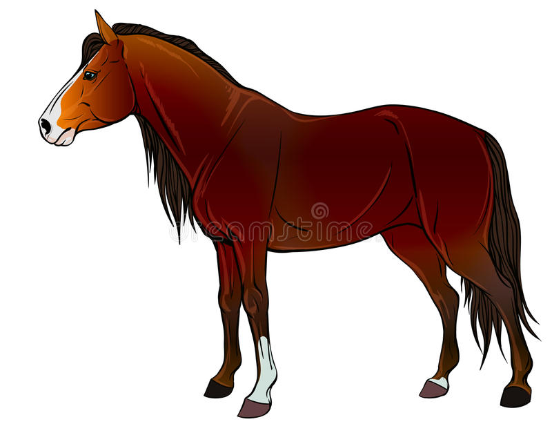 Профиль диких лошадей бесплатная иллюстрация