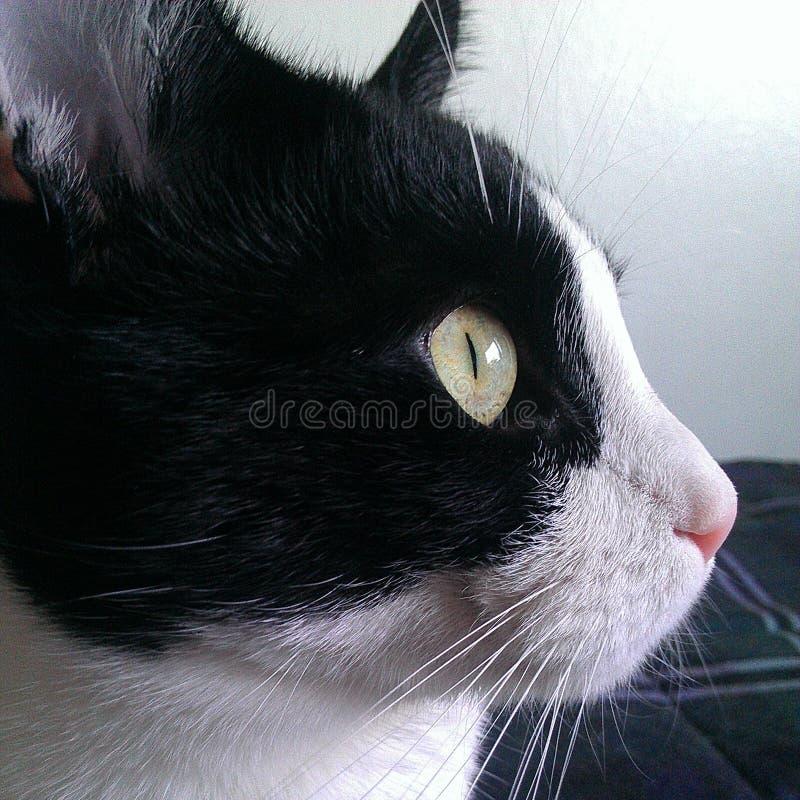 Профиль кота стоковое фото