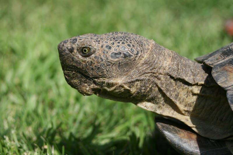 Профиль черепахи стоковое фото