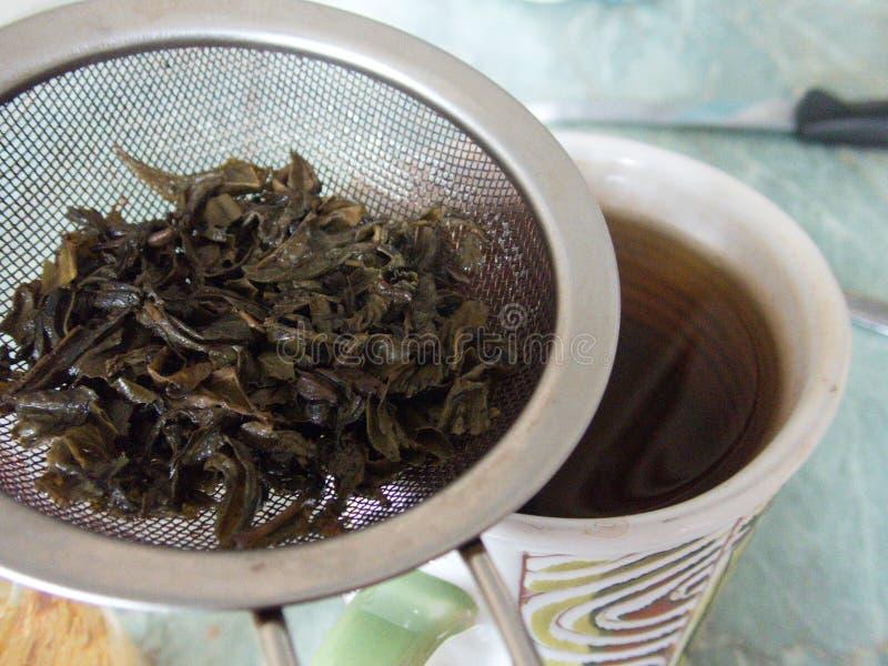 Процесс делать свежий зеленый чай стоковое фото rf
