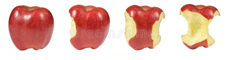 Процесс еды красного яблока изолированного на белой предпосылке Snacked яблоки коллаж на белой предпосылке стоковая фотография rf