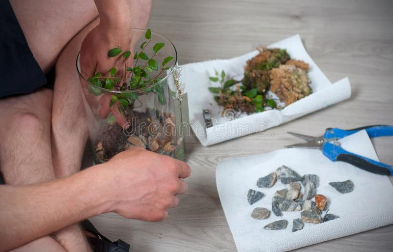 Процесс очищать бонзаи весной Бонзаи человека очищая от неправильных хворостин с ножницами стоковое изображение rf
