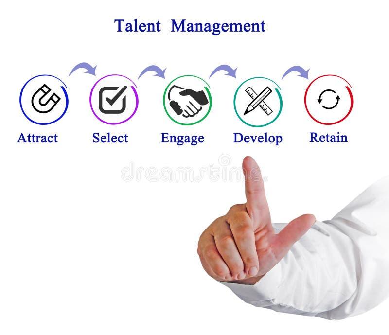 Процесс управления таланта стоковое изображение