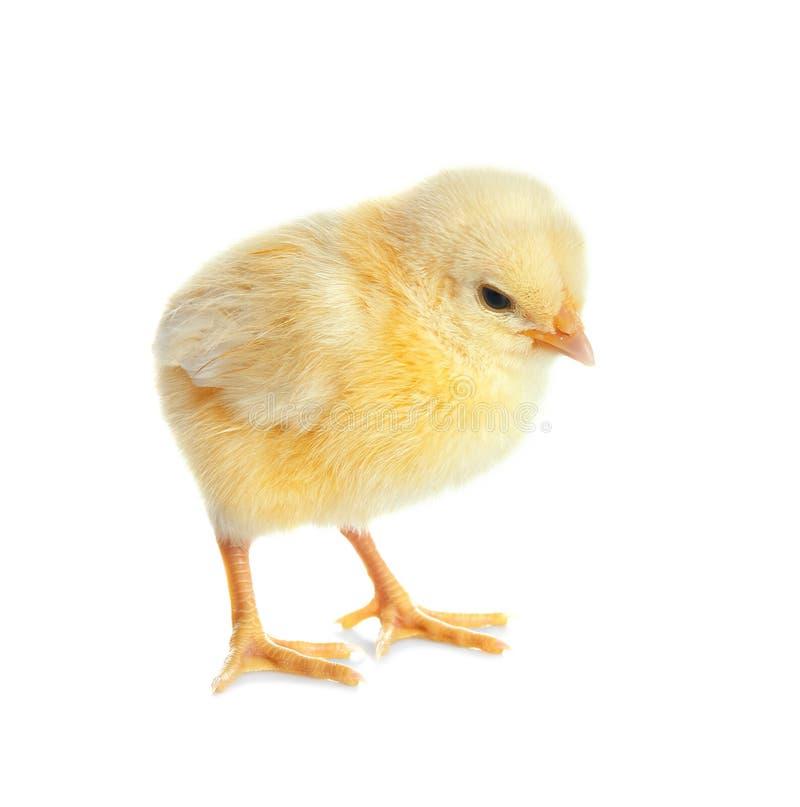 прочешите текст изображения милой рамки цыпленка смешной ваш стоковая фотография rf