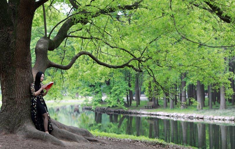 Прочитайте стойку книги под деревом цветения стоковые изображения